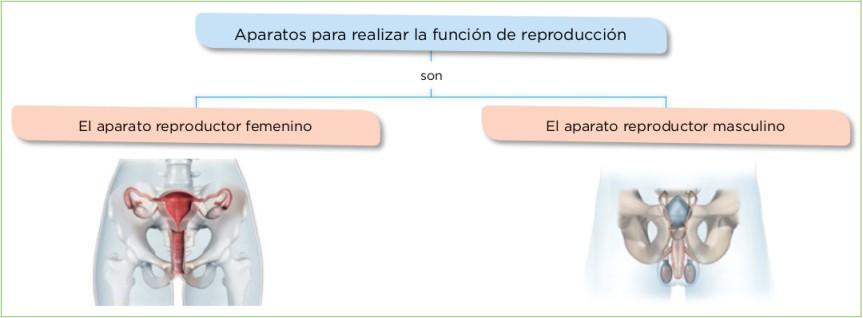 Aparatos para realizar la función de reproducción