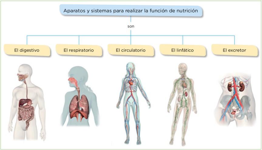 Aparatos y sistemas para realizar la función de nutrición