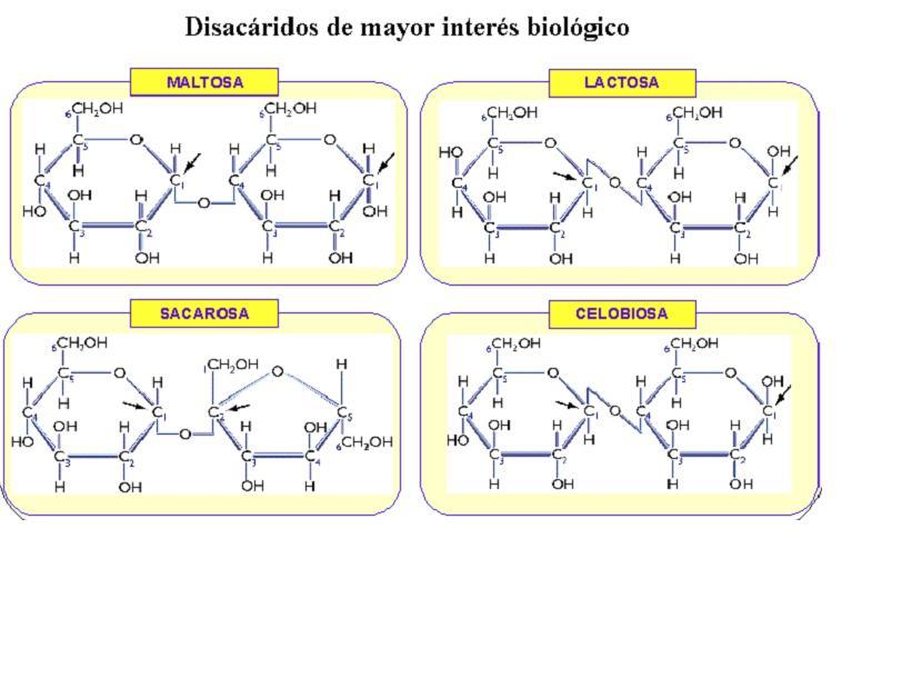 Disacaridos-de-interes-biologico