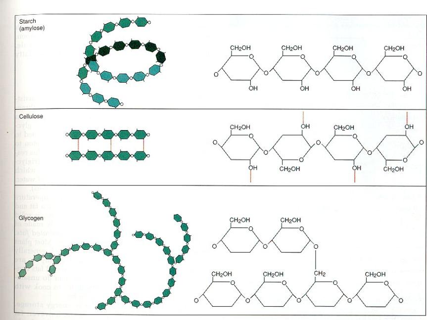 Estructura polisacáridos