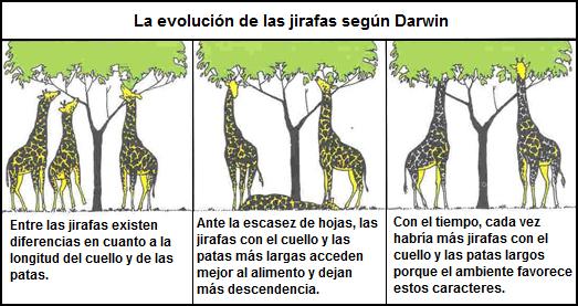 evolución de jirafas según darwin