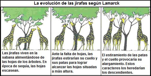 evolución de jirafas según lamarck