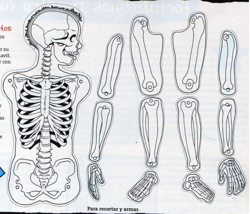 Esqueleto (3)
